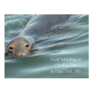 Cartão Postal Selo que olha no cais de Chatham em Cape Cod