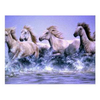 Cartão Postal Selvagem e livre, cavalos de Camargue