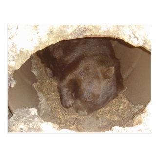 Cartão Postal Selvagem sobre Wombats