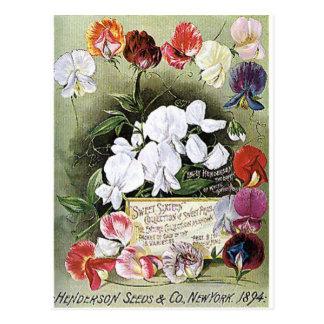 Cartão Postal sementes de ervilhas doces