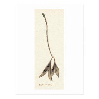 Cartão Postal Sementes do Laburnum