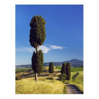 Cartão Postal (sempervirens) - Europa do cupressus, Italia,