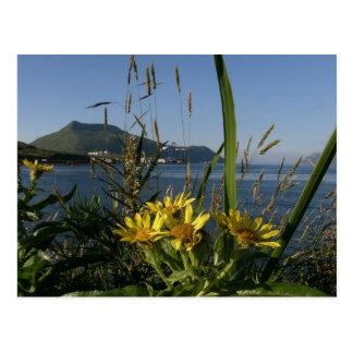 Cartão Postal Senecio de Seabeach, ilha de Unalaska