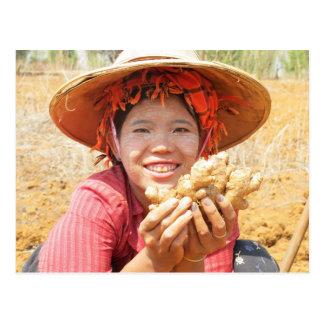Cartão Postal Senhora Burmese Colheita Gengibre