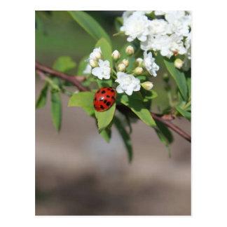 Cartão Postal Senhora Desinsetar e flores brancas