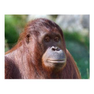 Cartão Postal Senhora do orangotango