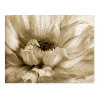 Cartão Postal Sepia branco & fundo de creme da dália