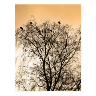 Cartão Postal Sepia que Roosting pássaros