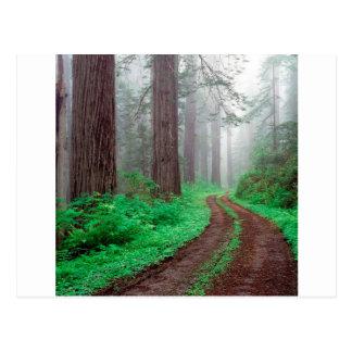 Cartão Postal Sequóia vermelha Califórnia da árvore