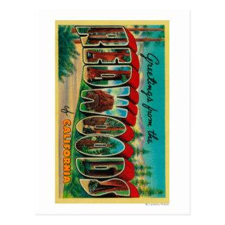 Cartão Postal Sequóias vermelhas, Califórnia - grandes cenas da