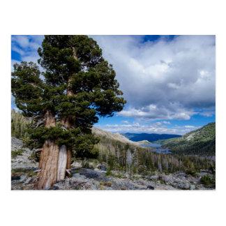 Cartão Postal Serra zimbro e árvores 2 do Evergreen