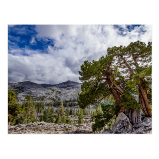 Cartão Postal Serra zimbro e árvores do Evergreen