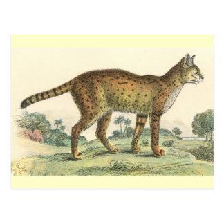 Cartão Postal Serval