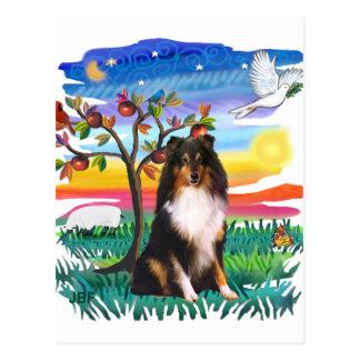 Cartão Postal Sheepdog de Shetland (tri)