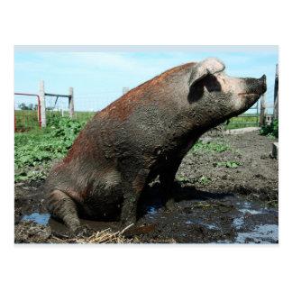 Cartão Postal Sheila, meu porco gordo grande