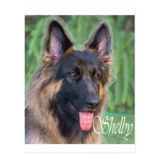 Cartão Postal Shelby