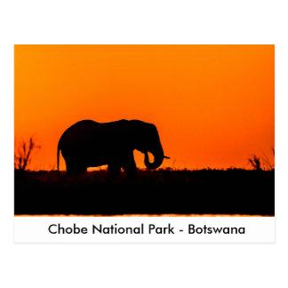 Cartão Postal Silhueta de um elefante Bull no por do sol