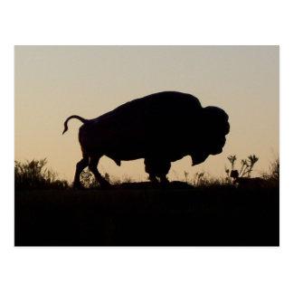 Cartão Postal Silhueta do búfalo
