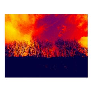 Cartão Postal Silhueta impressionante queimada das árvores do