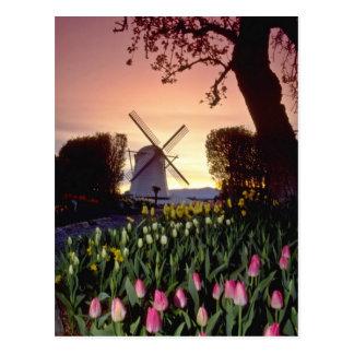 Cartão Postal Silhueta vermelha do moinho de vento e das
