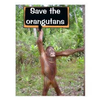 Cartão Postal Sinal do protesto do orangotango