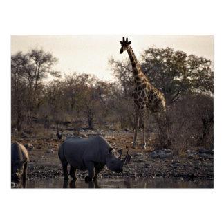 Cartão Postal Sira de mãe ao rinoceronte e ao rinoceronte novo