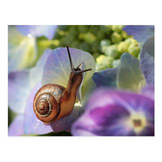 Cartão Postal Snail