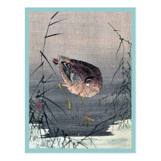 Cartão Postal Snipe o pássaro nos juncos por Ohara, Koson Ukiyoe