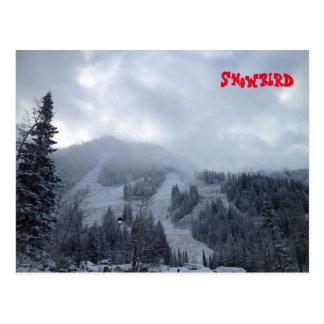 Cartão Postal Snowbird
