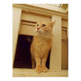 Cartão Postal Sob o gatinho das escadas