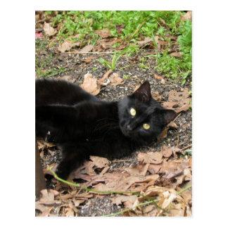Cartão Postal Sobrevivente de Katrina do gato da pimenta