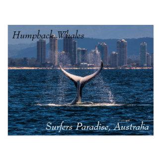 Cartão Postal Solha da cauda da baleia de Humpback fora do