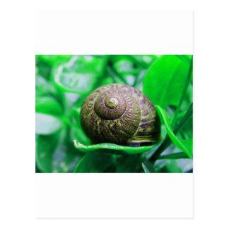 """Cartão Postal Solidão (aka """"caracol verde """")"""