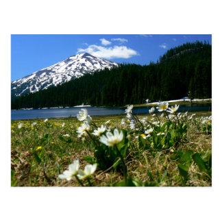 Cartão Postal Solteiro do Mt & Wildflowers 1