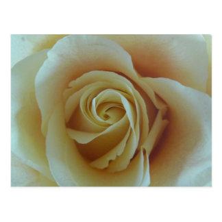 Cartão Postal Sonho de rosa