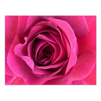 Cartão Postal Sonho de rosa em rosa