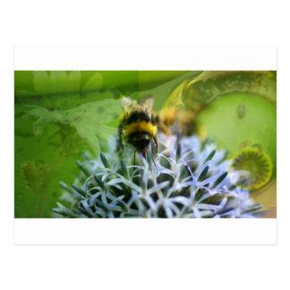 Cartão Postal Sonhos da abelha