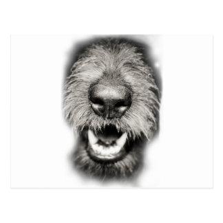 Cartão Postal Sorriso engraçado da cara do cão