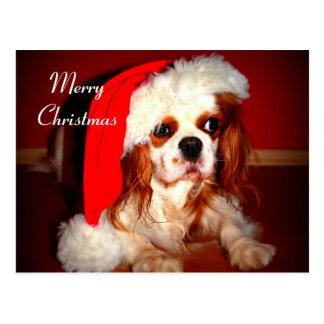 Cartão Postal Spaniel dos Cavalier do Feliz Natal
