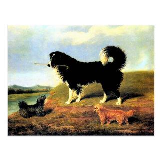 Cartão Postal Spaniel e dois terrier de Norfolk
