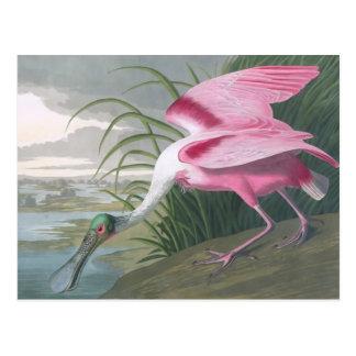 Cartão Postal Spoonbill róseo, belas artes de John James Audubon