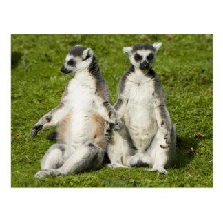 Cartão Postal Sr. & Sra. Lemur