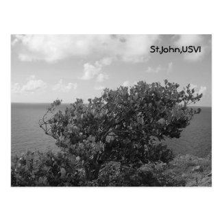 Cartão Postal St John, USVI