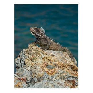 Cartão Postal St Thomas, iguana