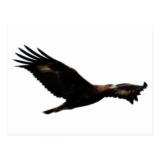 Cartão Postal Subir de Eagle dourado
