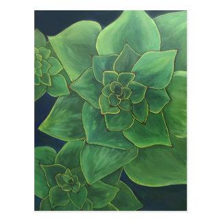 Cartão Postal Succulents verdes