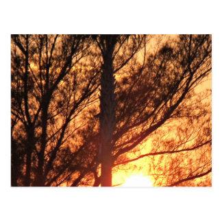 Cartão Postal Sun que brilha através das palmeiras
