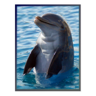 Cartão Postal suporte do golfinho