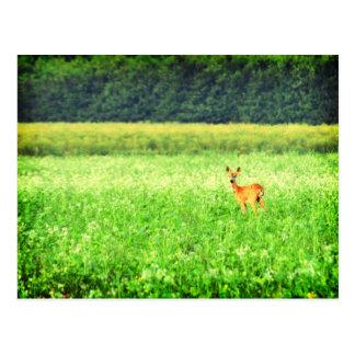 Cartão Postal Surpreendido, cervos nos campos Lomo