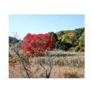 Cartão Postal Tag do folhagem de outono